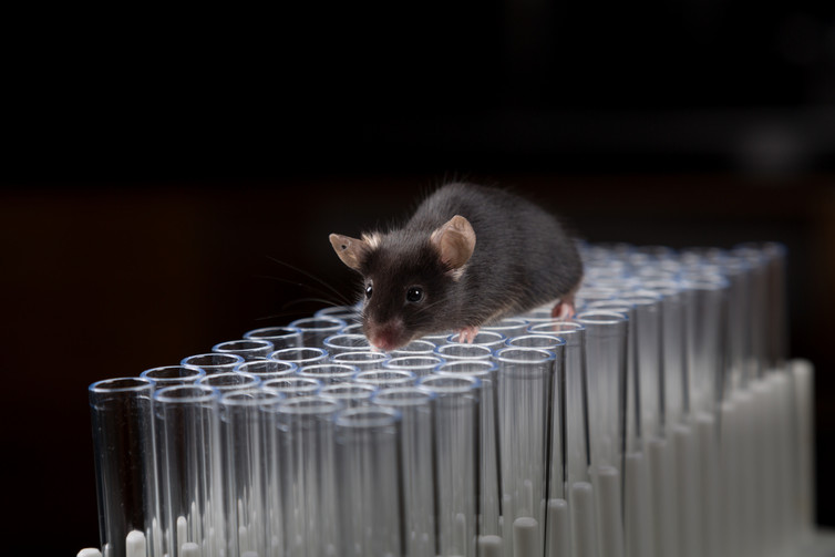 Image: The current vaccine candidates have only been tested in mice and human tissue.